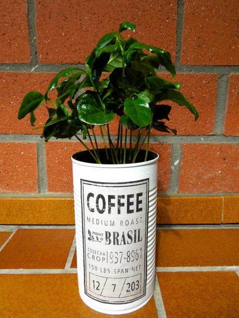 コーヒーの木 キッチン
