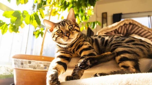 コーヒーの木 猫 大丈夫