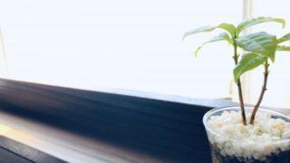 コーヒーの木 トイレ