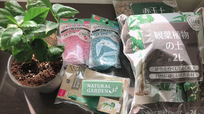 ダイソー 観葉植物 商品
